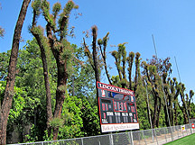 Evergreen Tree Service - Lincoln High School in Stockton, CA